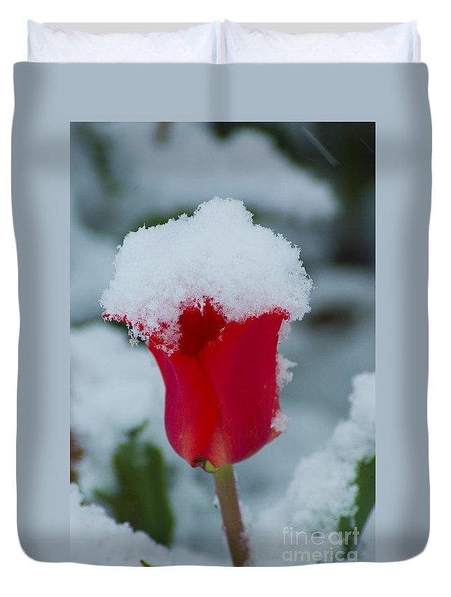 Tulip Duvet Cover featuring the photograph Snowy Red Riding Hood by Louise Magno