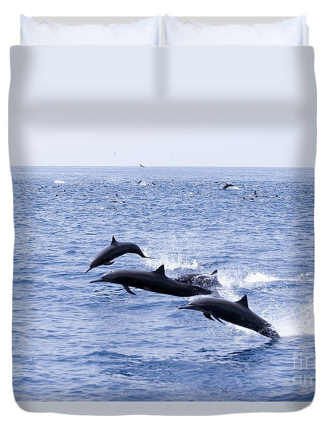 Amaze Duvet Cover featuring the photograph Spinner Dolphins by Rick Gaffney - Printscapes