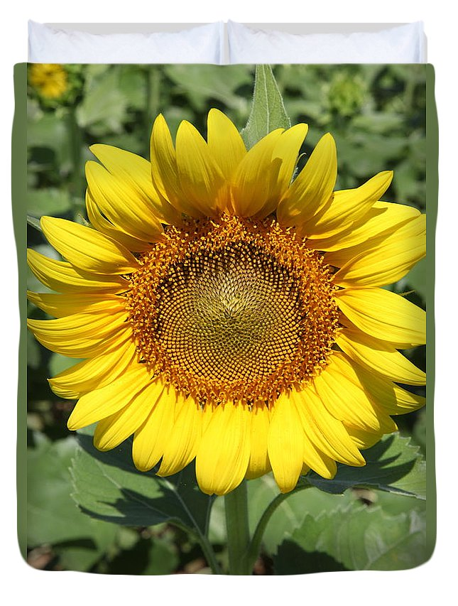 Sunflowers Duvet Cover featuring the photograph Sunflower 09 by Amanda Barcon