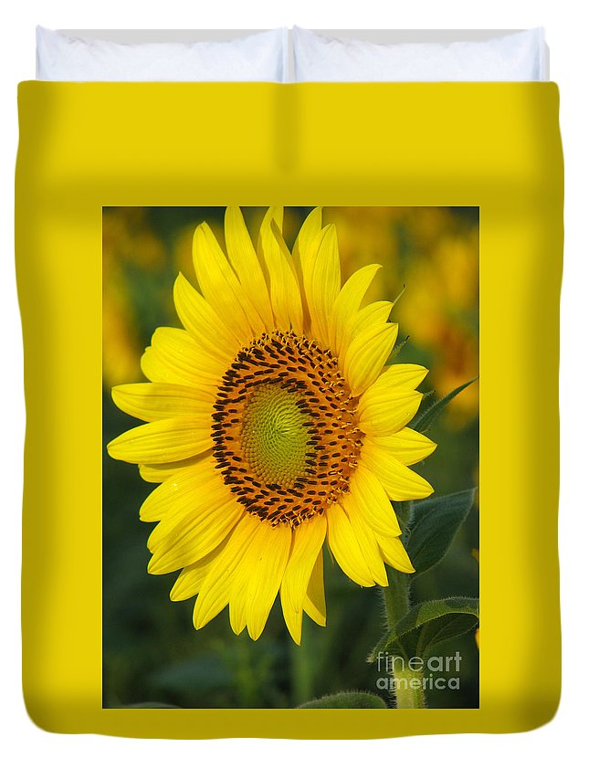 Sunflowers Duvet Cover featuring the photograph Sunflower by Amanda Barcon