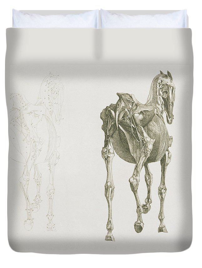 The Anatomy Of The Horse Duvet Cover For Sale By George Stubbs