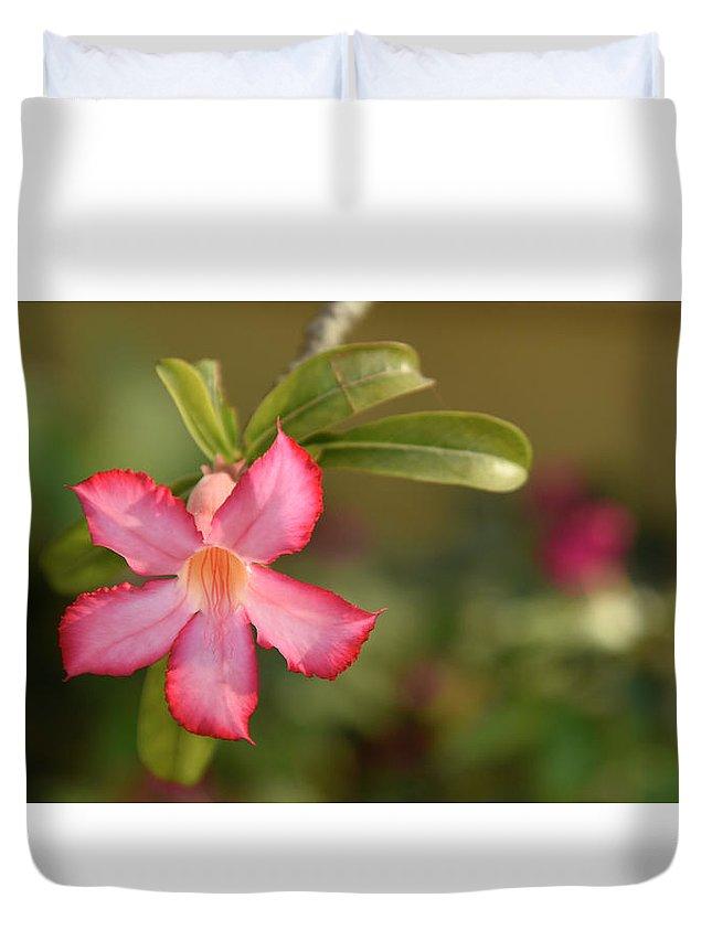 Flower Duvet Cover featuring the photograph The Pink Wonder by Kedar Munshi