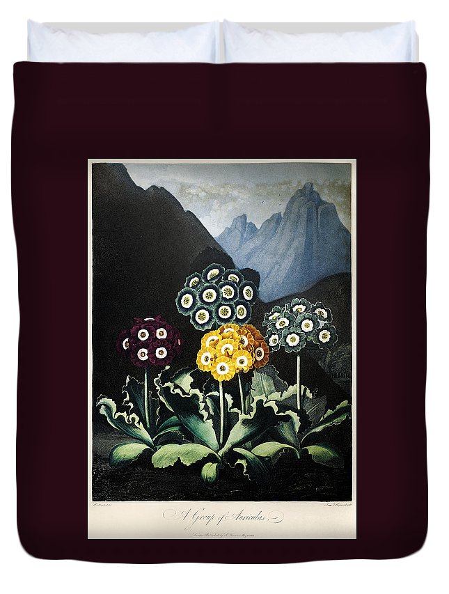 1807 Duvet Cover featuring the photograph Thornton: Auriculas by Granger