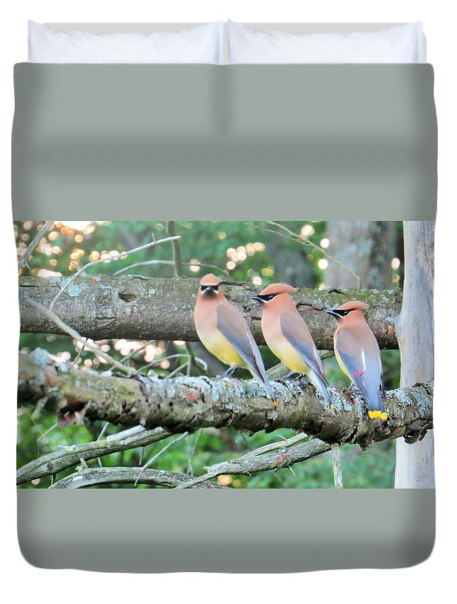 Birds Duvet Cover featuring the photograph Three In A Row by Jeanette Oberholtzer