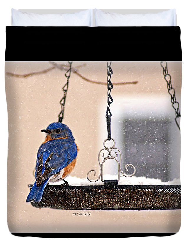 Bluebird Duvet Cover featuring the photograph Transfixed by Catherine Melvin