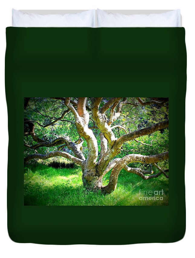 Photography Duvet Cover featuring the photograph Tree In Golden Gate Park by Carol Groenen