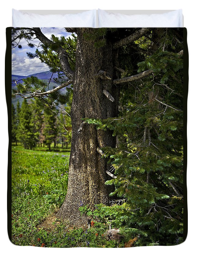 Tree Duvet Cover featuring the photograph Tree In Vail by Madeline Ellis