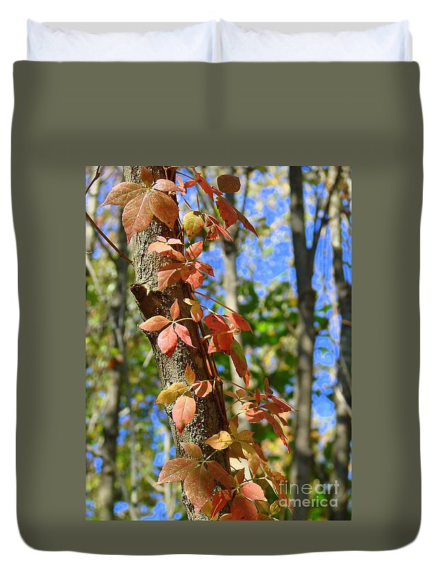 Trees Duvet Cover featuring the photograph Tree by Annelize Van der Grient