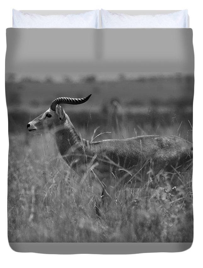 Africa Duvet Cover featuring the photograph Uganda Cob by Gordon Longmead