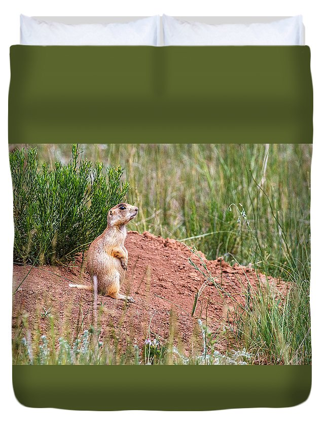 James Marvin Phelps Photography Duvet Cover featuring the photograph Utah Prairie Dog by James Marvin Phelps