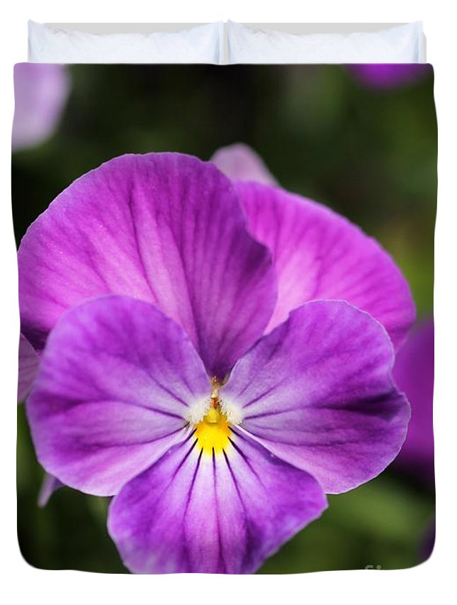 Mccombie Duvet Cover featuring the photograph Viola Named Columbine by J McCombie