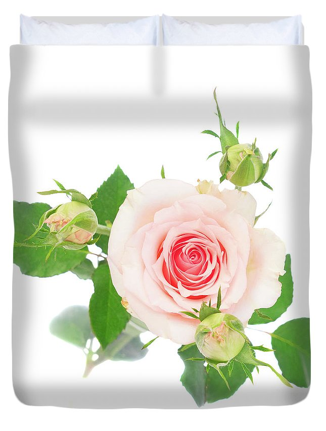Rose Duvet Cover featuring the photograph Pink Rose With Buds by Anastasy Yarmolovich