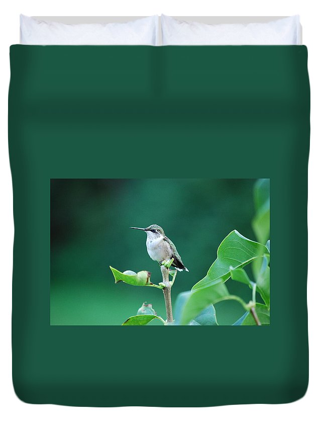 Hummingbird Duvet Cover featuring the photograph Waiting by Lori Tambakis