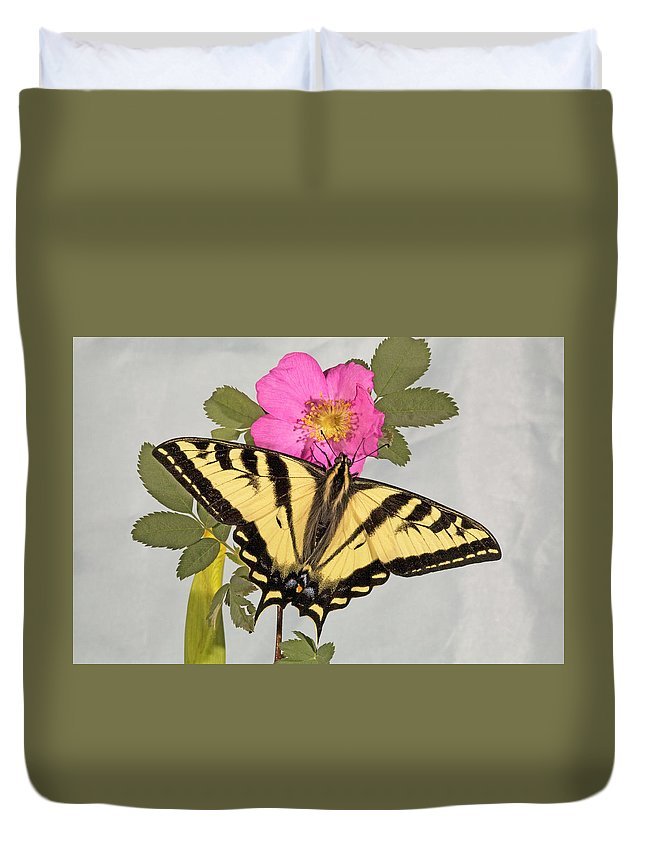 Western; Tiger; Swallowtail; Butterfly; Butterflies; Papilio; Rutulus; Wildflower; Nooka; Rose; Sitting; Feeding; Resting; Eating; Nectar; Sipping; Colorful; Insect; Bug; Fly; Flies; Flight; Flutter; Color Duvet Cover featuring the photograph Western Tiger Swallowtail by Buddy Mays