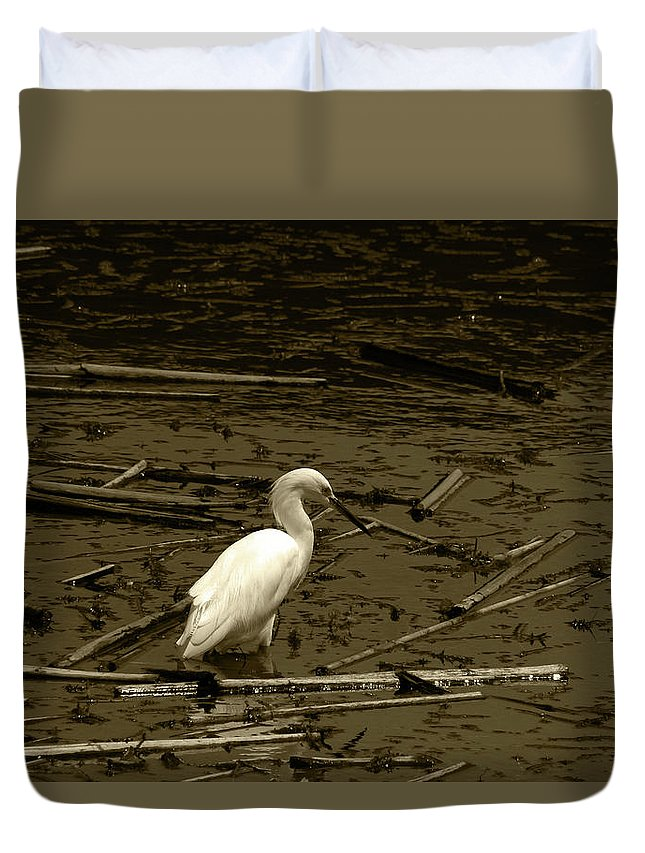 Snowy Egret Duvet Cover featuring the photograph White Snowy Egret by Robert Hamm