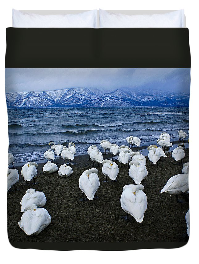 Japan Duvet Cover featuring the photograph Whooper Swans In Winter by Michele Burgess