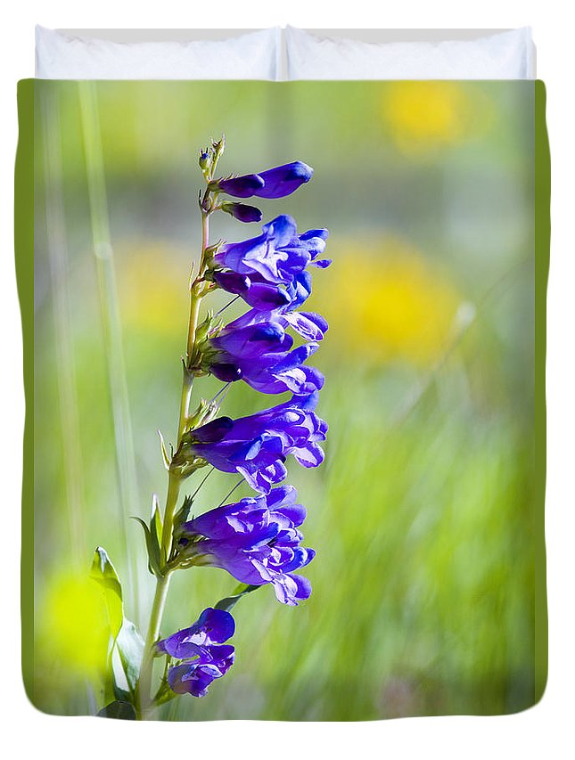 Mountain Bluebell Duvet Cover featuring the photograph Wildflowers And Pikes Peak In The Pike National Forest by Steve Krull