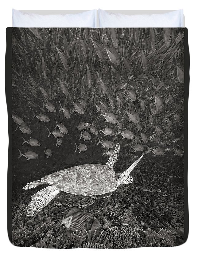 Among Duvet Cover featuring the photograph Green Sea Turtle by Dave Fleetham - Printscapes