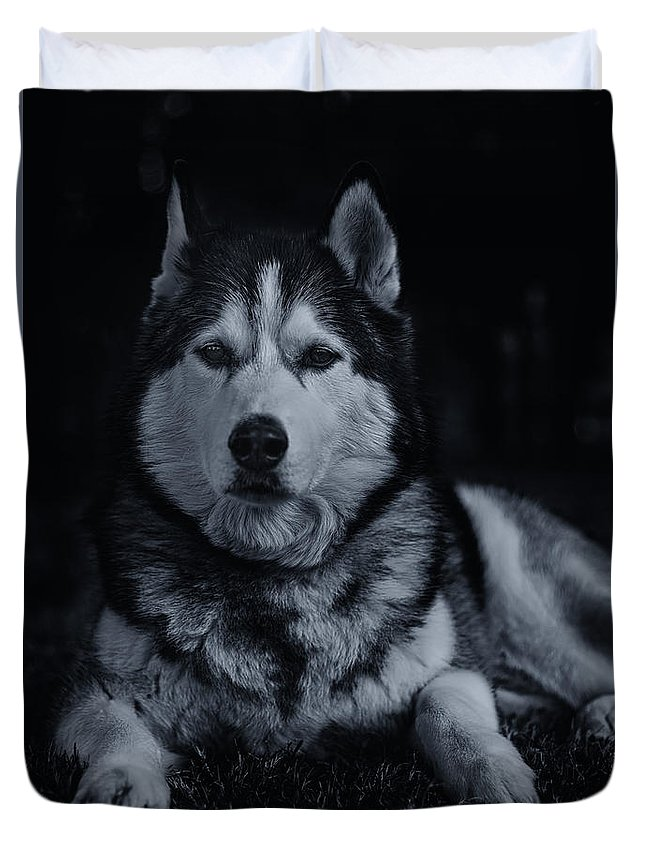 Animal Duvet Cover featuring the photograph Timber by Brian Cross