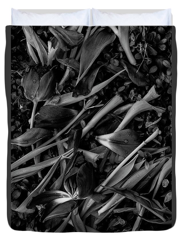 Tulips Duvet Cover featuring the photograph Tulips Wilting by Jim Corwin
