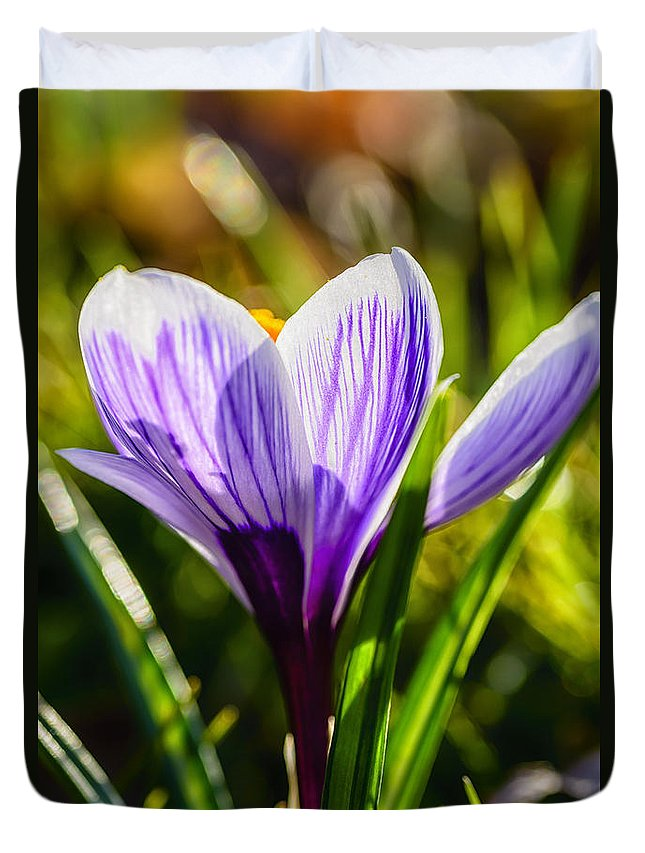 Crocus Duvet Cover featuring the photograph Crocus In Bloom by Thomas R Fletcher