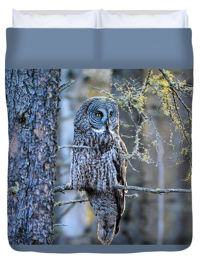Great Gray Owl Duvet Cover featuring the photograph Great Gray Owl by Matthew Gutt