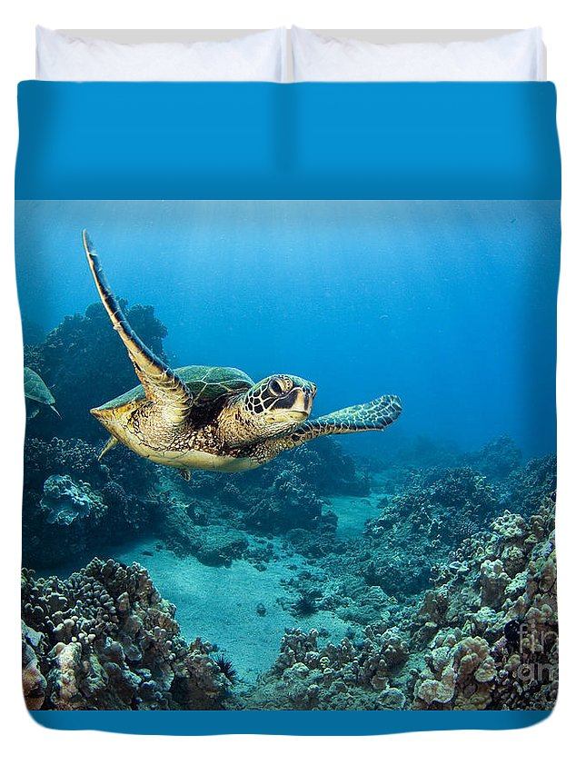 Animal Art Duvet Cover featuring the photograph Green Sea Turtle by Dave Fleetham - Printscapes