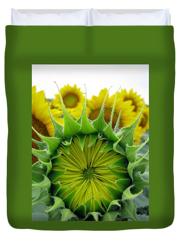 Sunflwoers Duvet Cover featuring the photograph Sunflower Series by Amanda Barcon