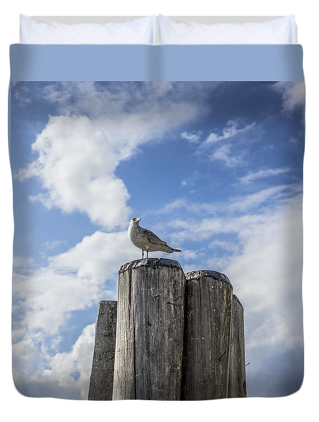 Seagull Duvet Cover featuring the photograph Untitled by Megan Yohn