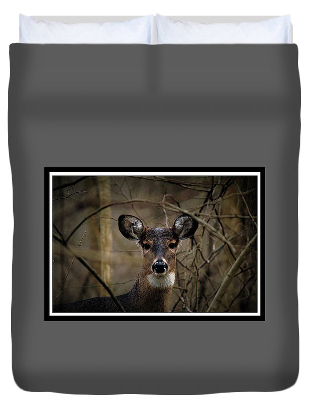 Deer Duvet Cover featuring the photograph 120211-27 by Mike Davis