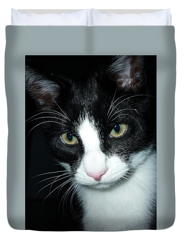 Cat Duvet Cover featuring the photograph Cat by FL collection