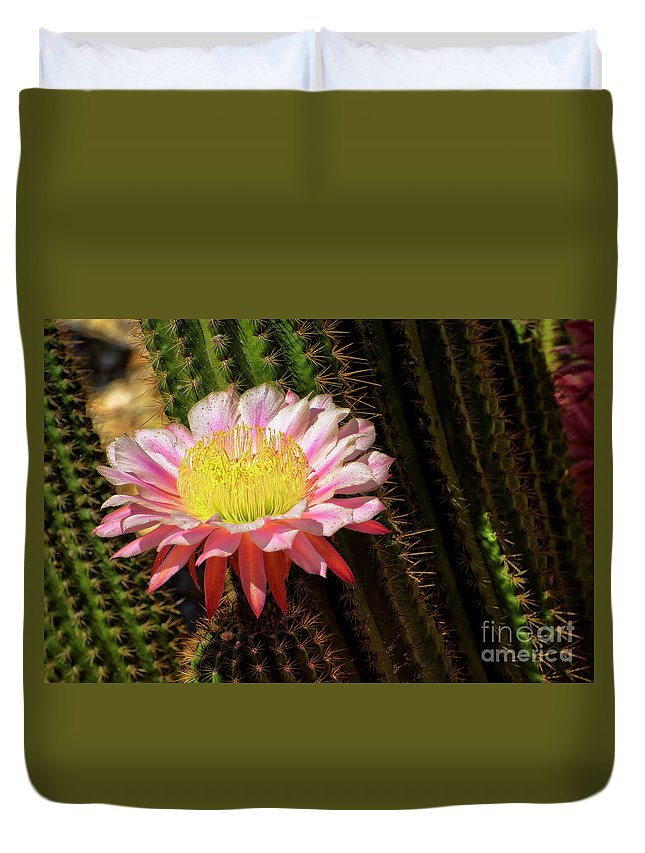 Cactus Duvet Cover featuring the photograph Pink Cactus Flower by Jim And Emily Bush