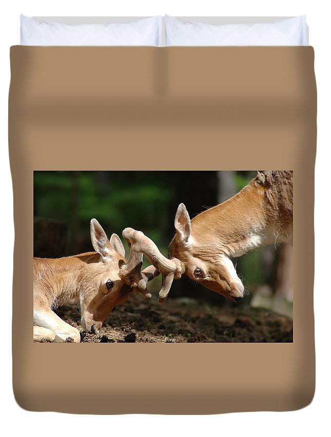 Bambi Duvet Cover featuring the photograph Deer by FL collection