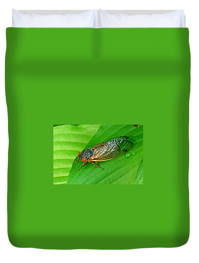 17 Duvet Cover featuring the photograph 17 Year Periodical Cicada by Douglas Barnett