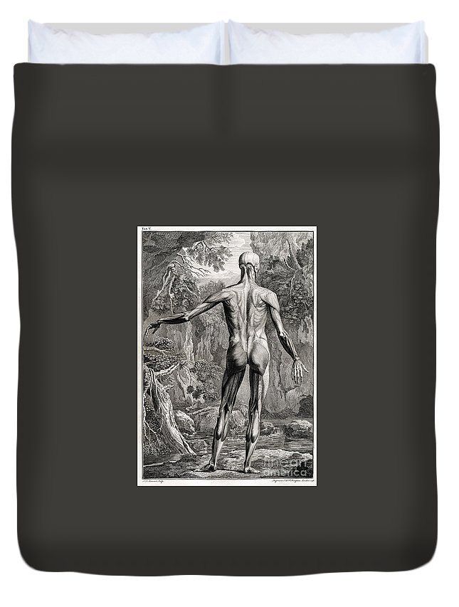 Science Duvet Cover featuring the photograph 18th Century Anatomical Engraving by Science Source