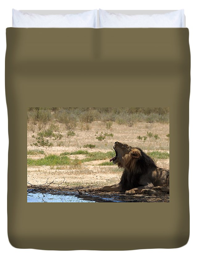 Kgalagadi Duvet Cover featuring the photograph Lion by Davide Guidolin