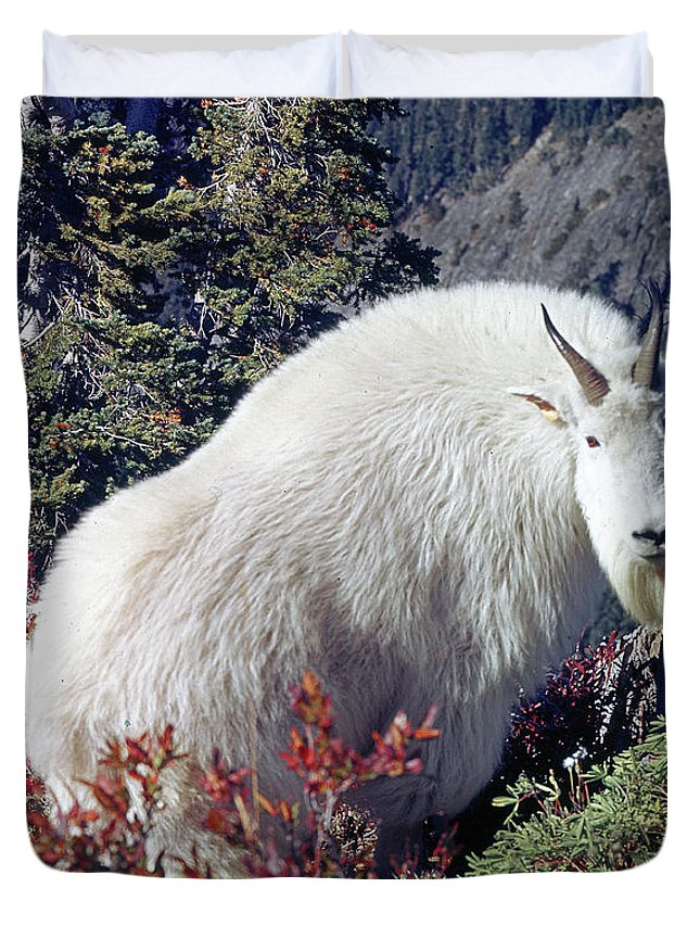 Mountain Goat Duvet Cover featuring the photograph 1m4900 Mountain Goat Near Mt. St. Helens by Ed Cooper Photography