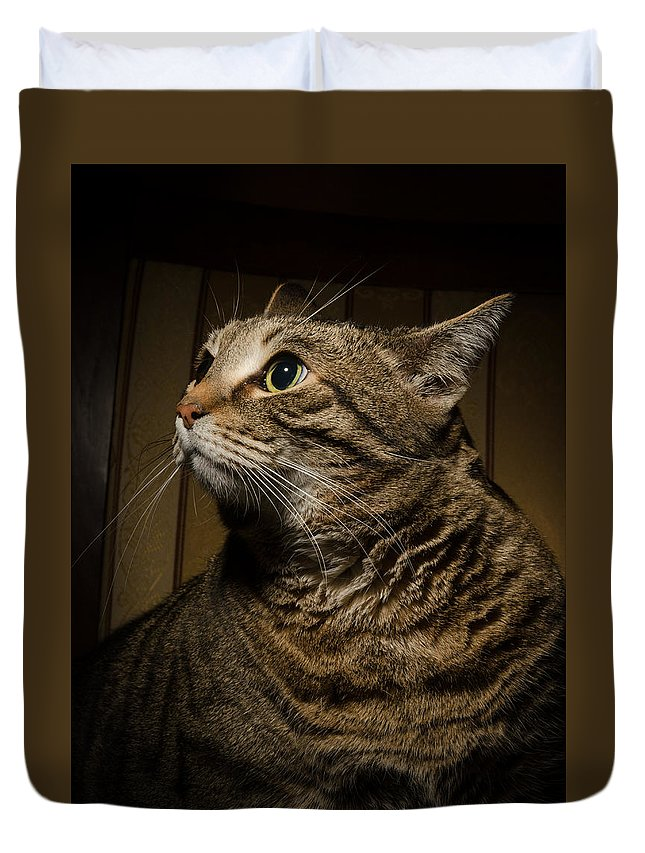 Adopting Duvet Cover featuring the photograph Big Cat On Chair by Nikita Buida