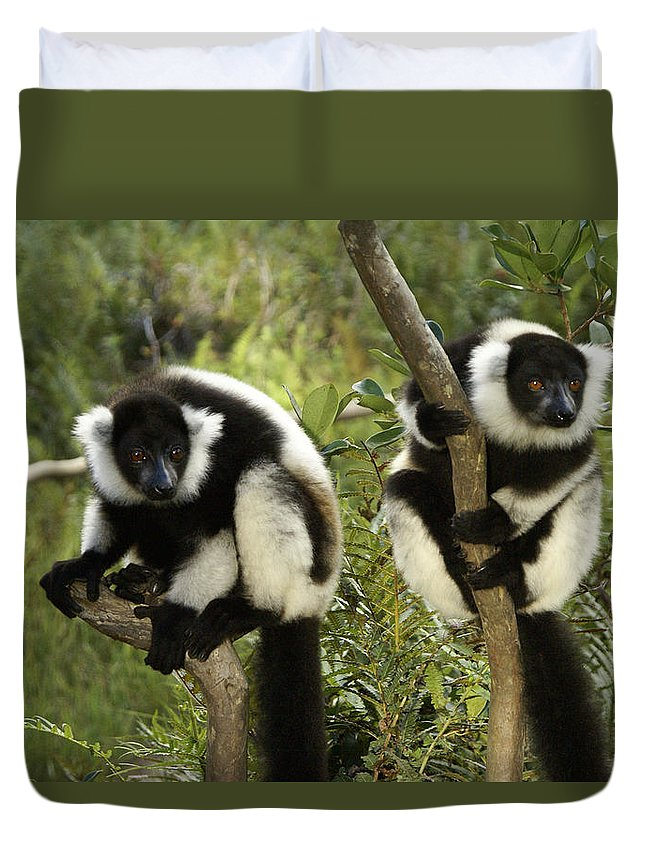 Madagascar Duvet Cover featuring the photograph Black And White Ruffed Lemur by Michele Burgess