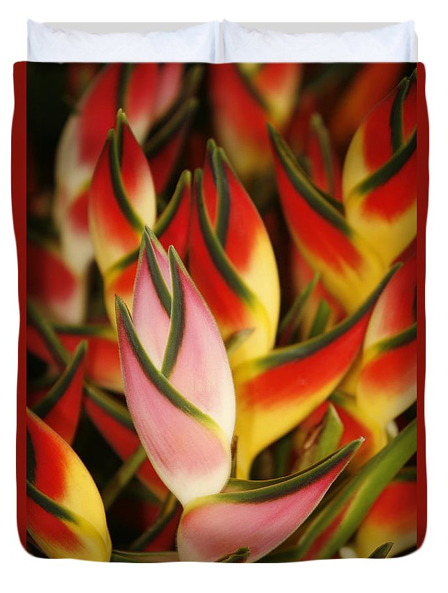 Beautiful Duvet Cover featuring the photograph Bunch Of Heliconia by Ron Dahlquist - Printscapes