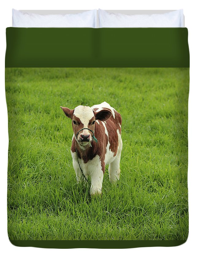 Calf Duvet Cover featuring the photograph Calf In A Pasture by Robert Hamm