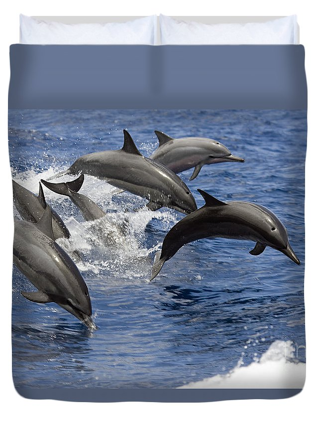 Animal Art Duvet Cover featuring the photograph Dolphins Leaping by Dave Fleetham - Printscapes