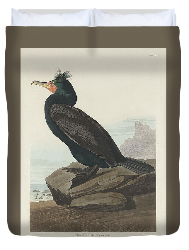 Audubon Duvet Cover featuring the drawing Double-crested Cormorant by Dreyer Wildlife Print Collections