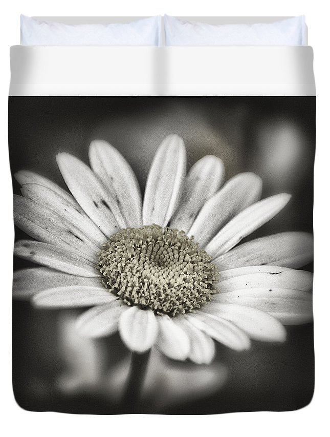 Daisy Duvet Cover featuring the photograph Evening Shade by Robert Fawcett