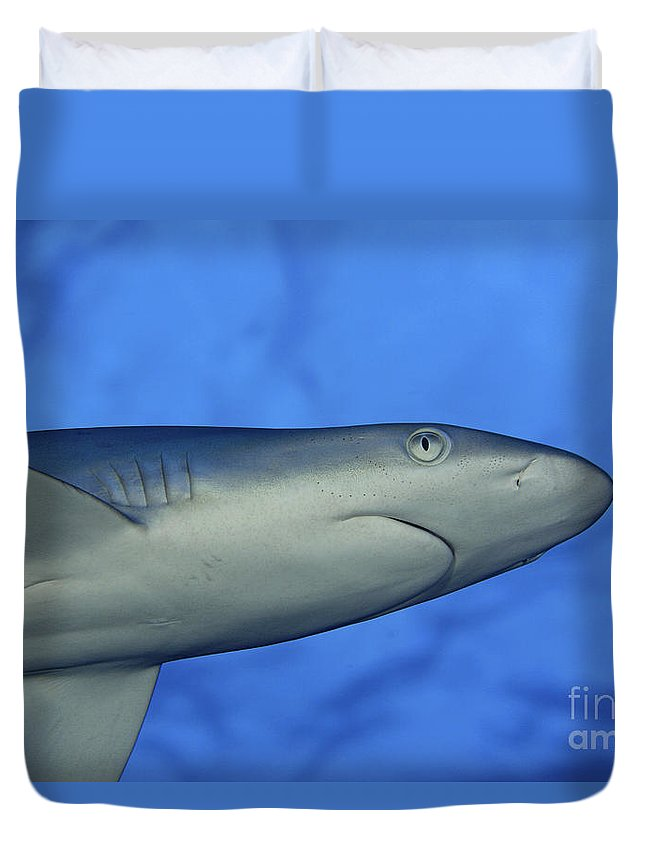 Amblyrhnchos Duvet Cover featuring the photograph Grey Reef Shark by Dave Fleetham - Printscapes