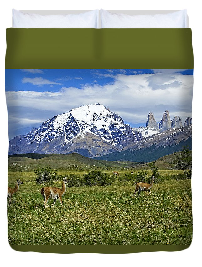 Patagonia Duvet Cover featuring the photograph Guanacos in Torres del Paine by Michele Burgess