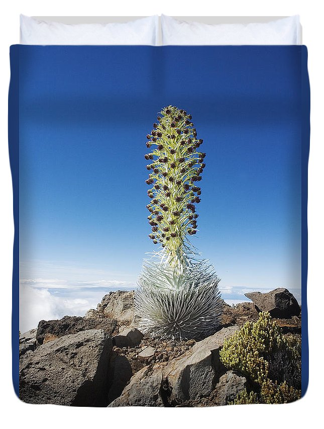 Above Duvet Cover featuring the photograph Haleakala Silversword by Ron Dahlquist - Printscapes