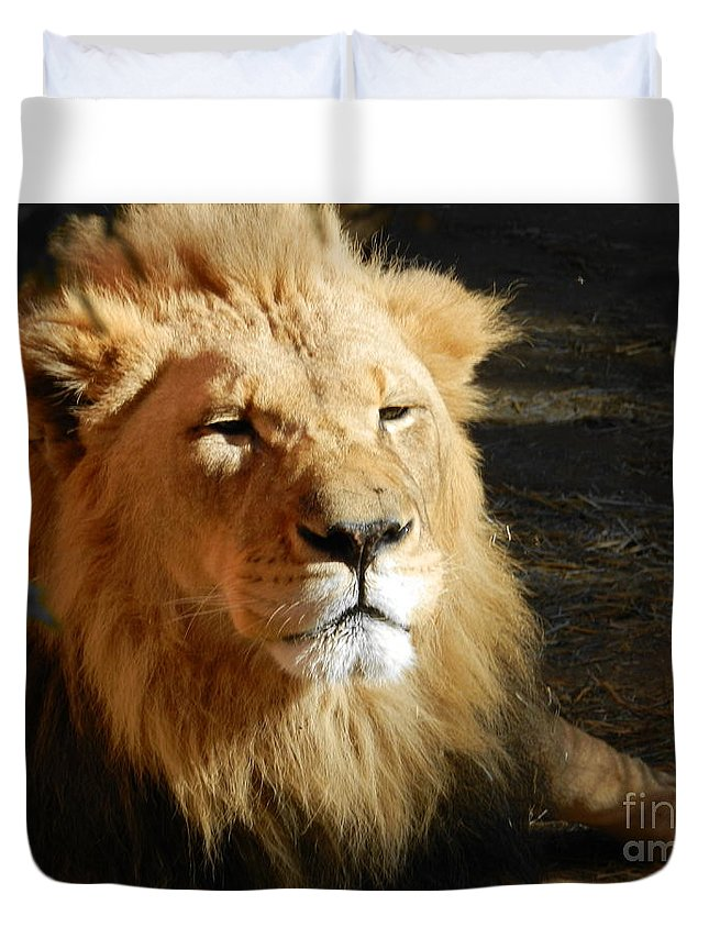 Lion Duvet Cover featuring the photograph Lion by Kevin Rios