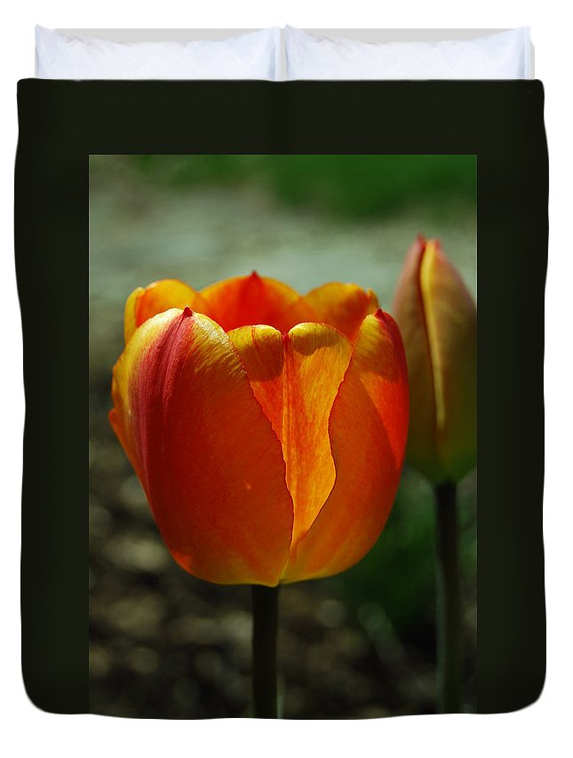 Tulips Duvet Cover featuring the photograph 2 Lips by Trish Hale