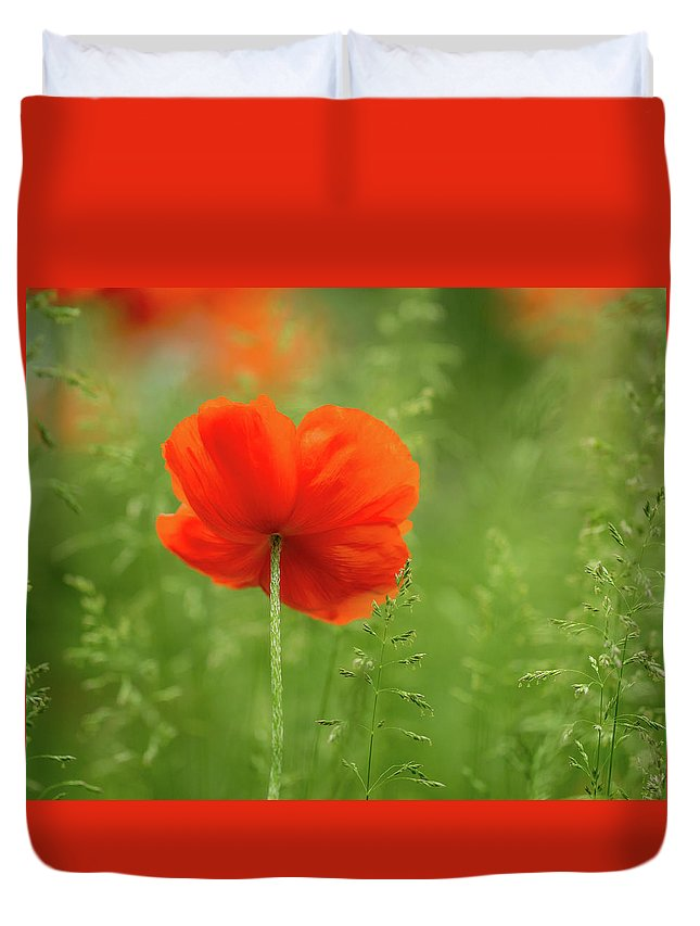 Poppy Duvet Cover featuring the photograph Lone Poppy by Thomas Miller